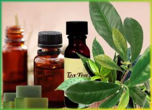 Масло чайного дерева - лечение - применение для лица, волос, кожи